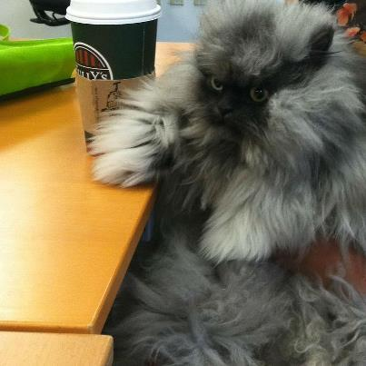Colonel Meow visits Cheezburger HQ, home of The Daily What.