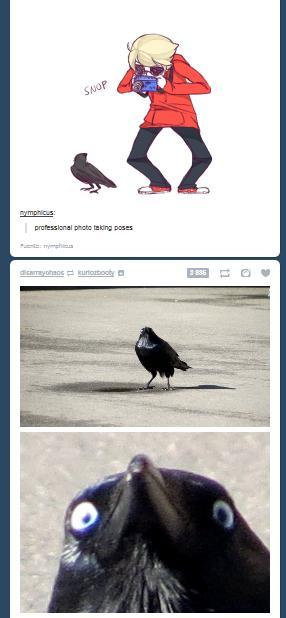 caw caw motherfucker