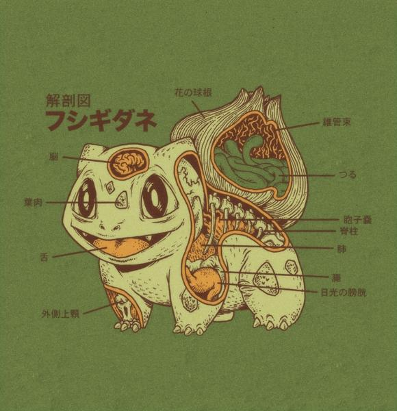 The Anatomy of Bulbasaur