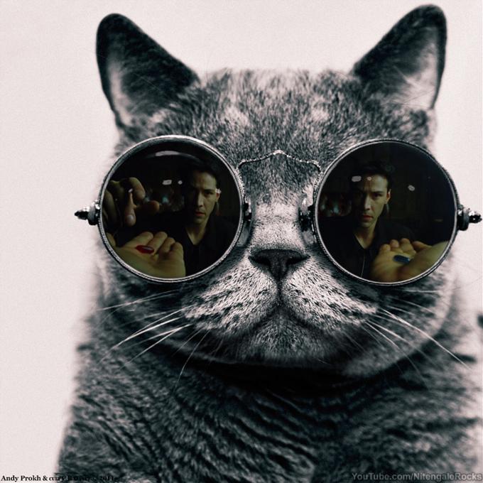 Morpheus Cat