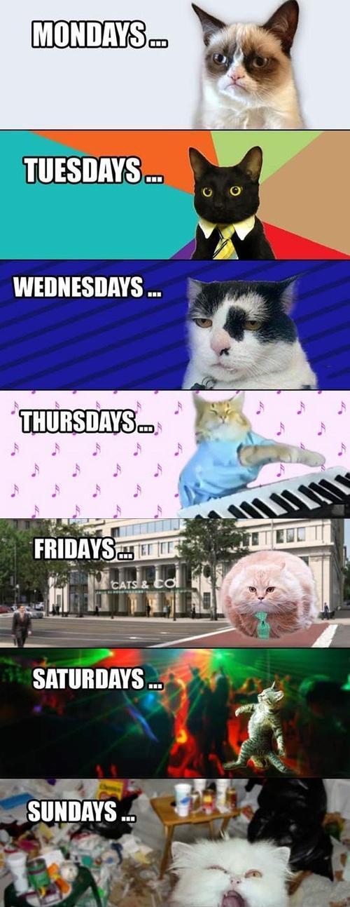 Internet cats, HOOOOOO!