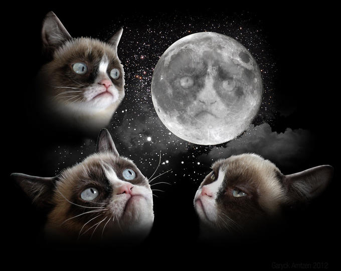 Three Cat Moon