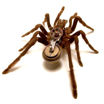 217 infected spider