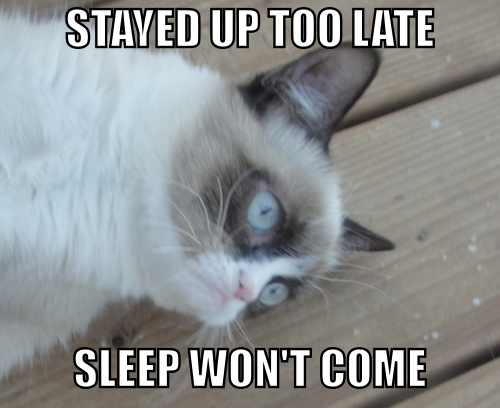 Grumpy Cat: sleep won't come