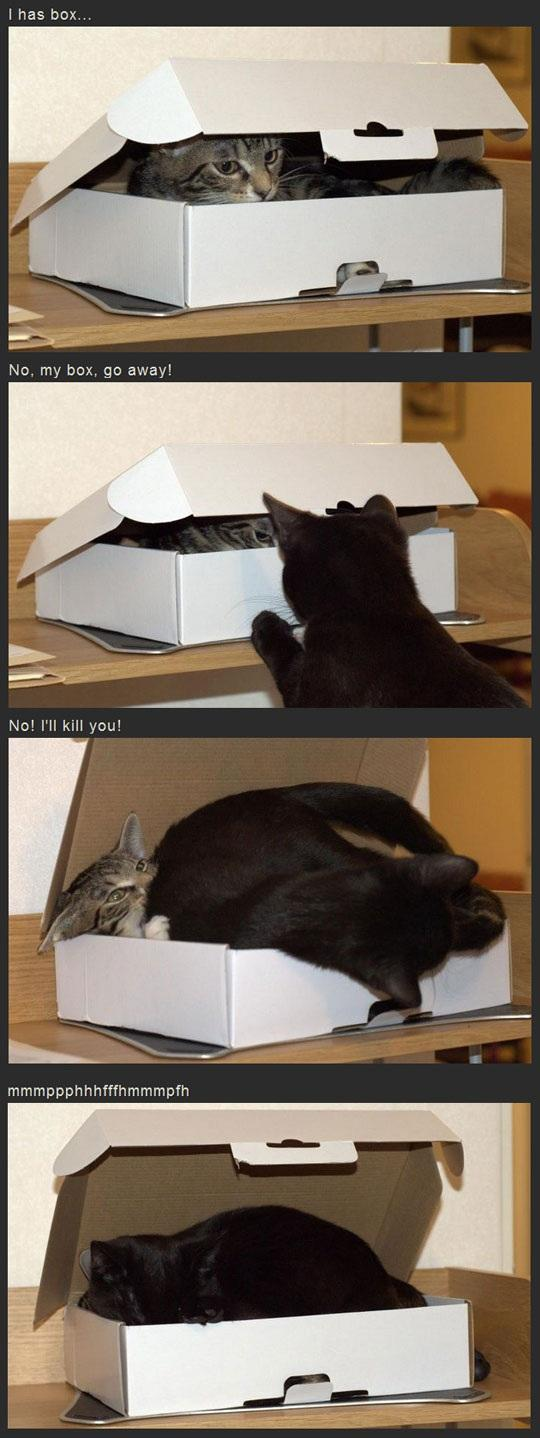 Cats Fighting Over Box
