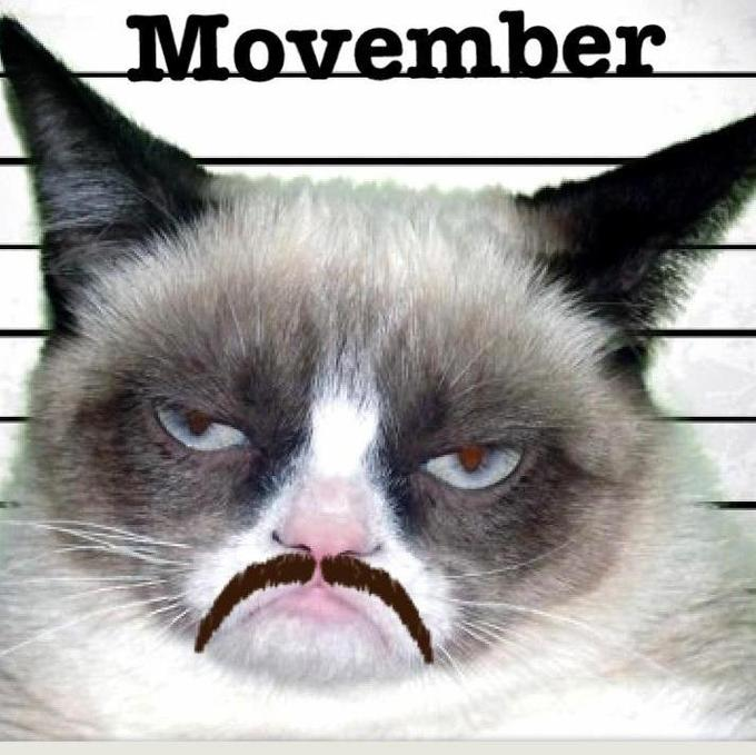 movember grumpy cat