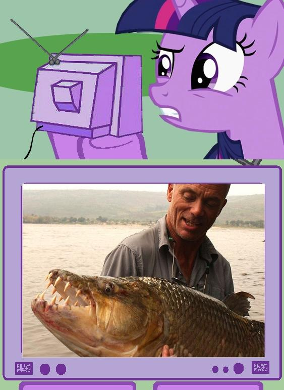 Twilight watches River Monsters