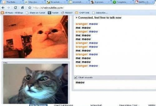 Chatroulette for cats