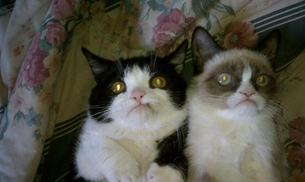 "Grumpy Cat and ""Not Impressed"" Cat"