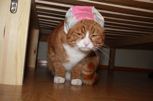 Sulo the Grumpy Cat