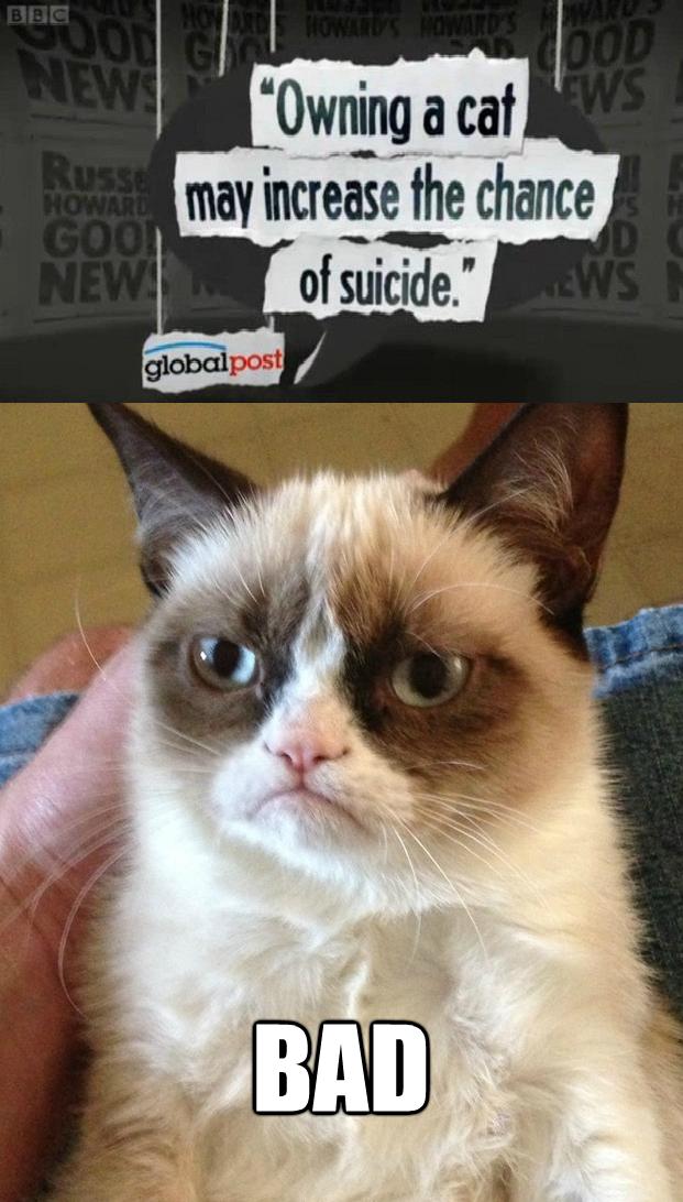 The No Grumpy Cat