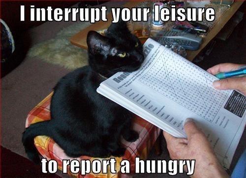 Report A Hungry Cat