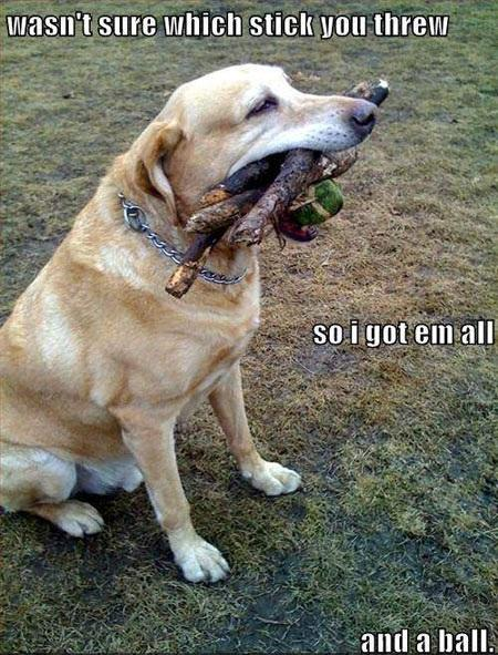 The Overachiever Dog