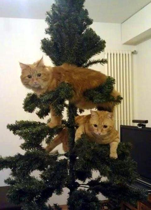 Annoying Cat Ornaments