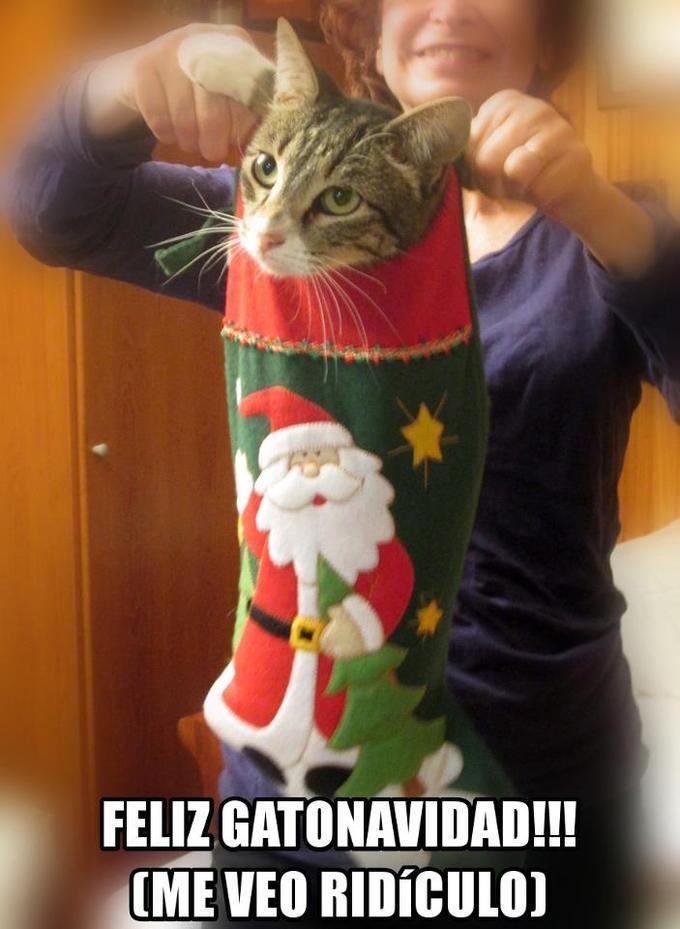 Merry Catx-Mas