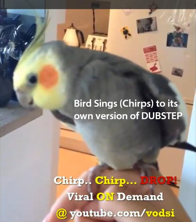 Dubstep Singing Bird on YouTube, CHIRP CHIRP DROP!
