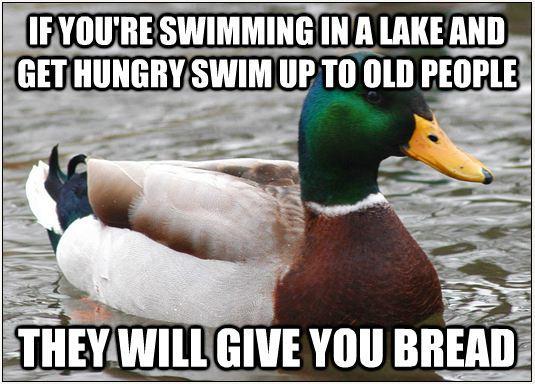 Literal advice Mallard