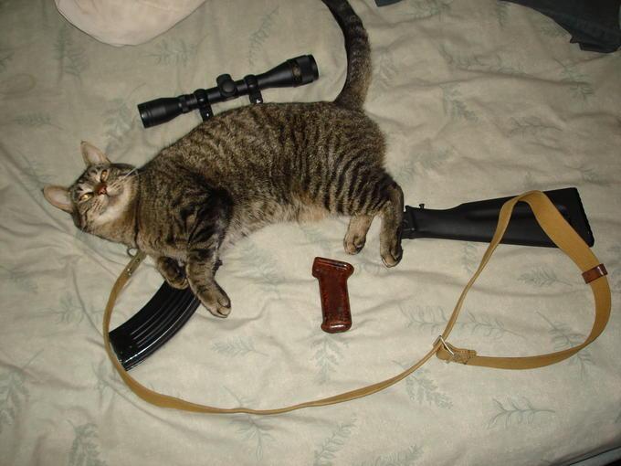 Custom Cat Rifle