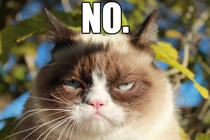 Grumpy Cat Memes No Grumpy Cat No