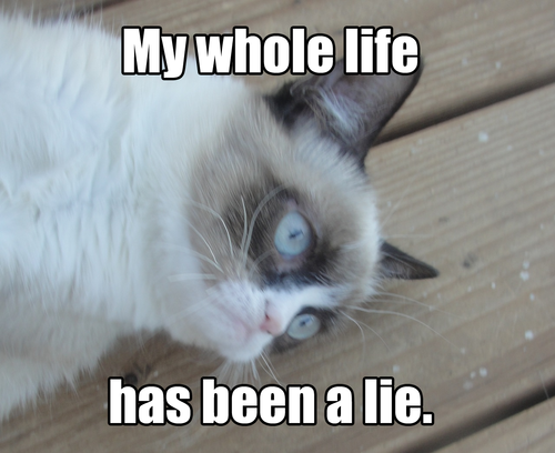 fdb my whole life has been a lie grumpy cat know your meme