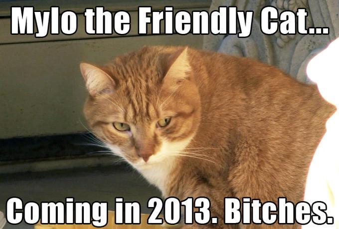 Mylo the Friendly Cat