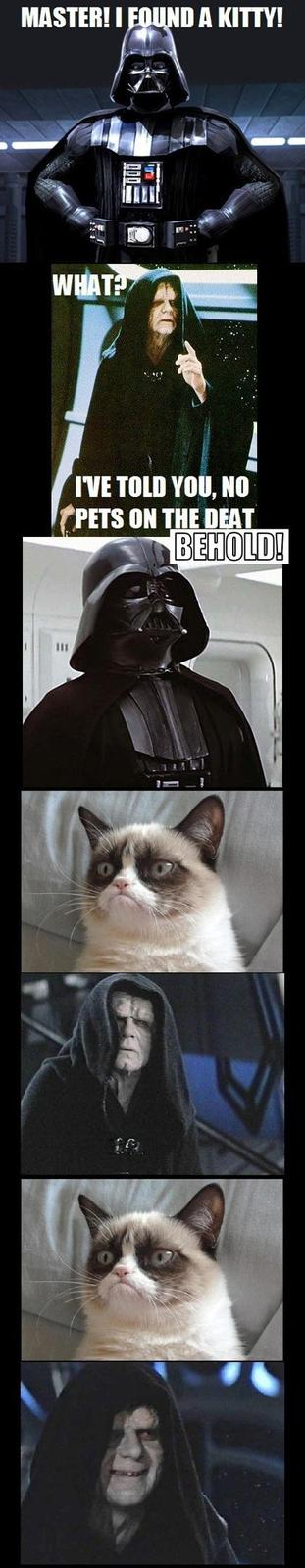 Darth Vader Found Grumpy Cat