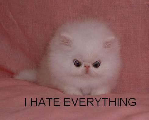 47a image 492232] fluffy white cat know your meme