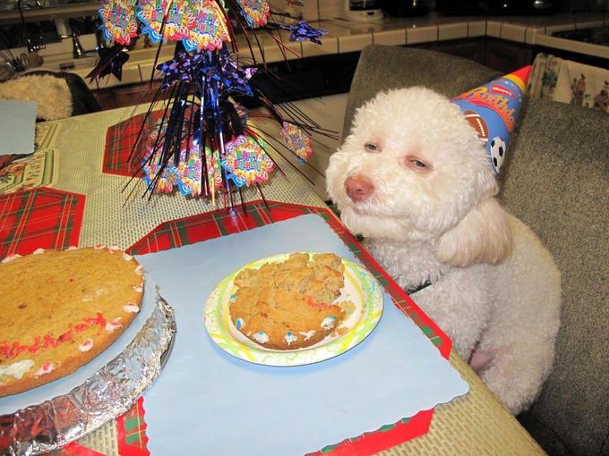 Birthday Buscemeyes