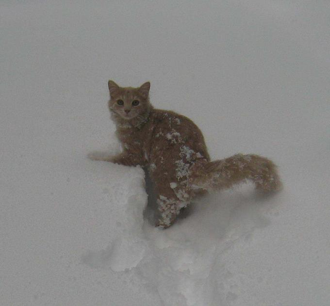 Snow Cat Tommy