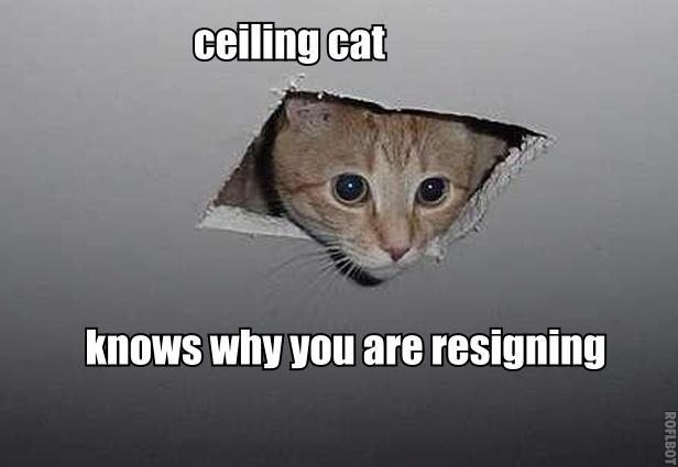 Ceiling Cat Knows Why You Are Resigning