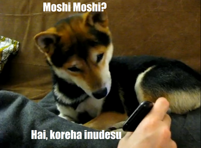 """Yes this is dog"" meets ""Moshi Moshi X Desu"""