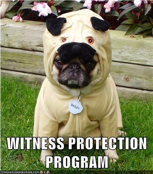 Pug Witness Protection Program