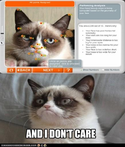 Grumpy Cat Don't Give a Shit