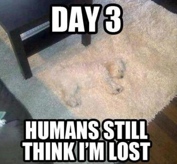 Day 3 - Humans still think I'm lost