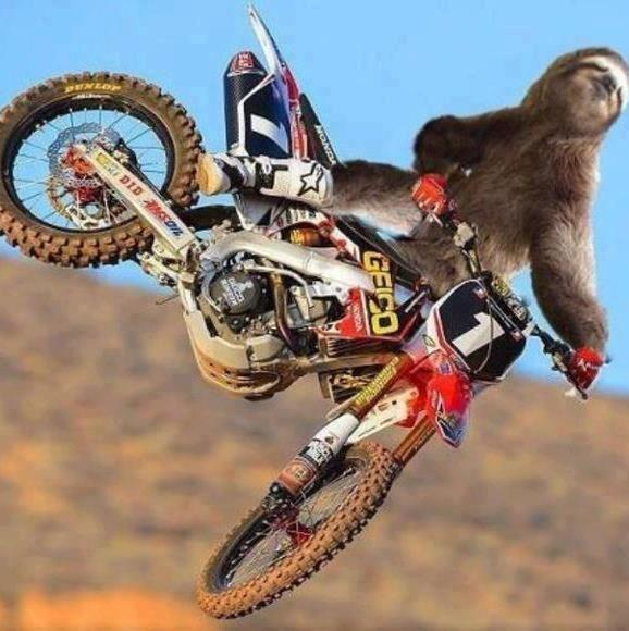 Dirt biking Sloth