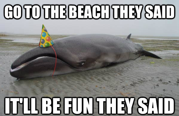 Disgruntled Whale with a Party Hat
