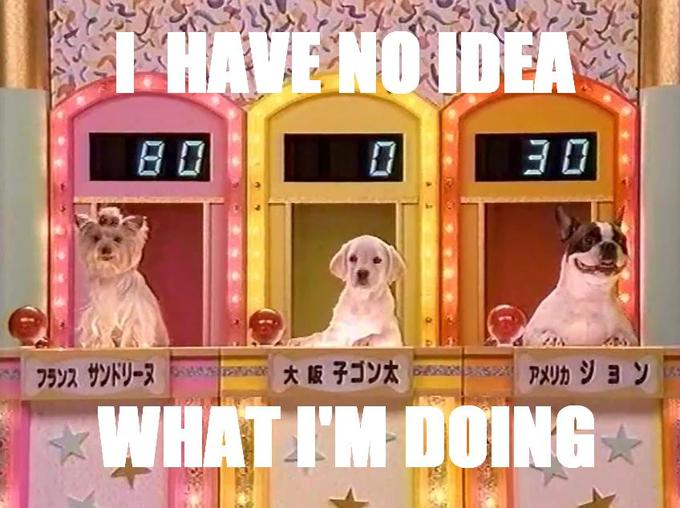 Dog Game Show?