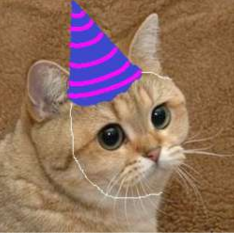 Stare Cat Party Hat