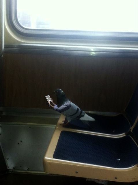 A Pigeon Reading Kindle on a Commute Train