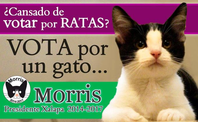Got enough of voting for rats? Vote for a cat.
