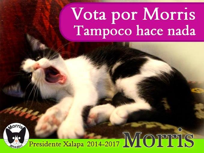 Vote for Morris, like all the other he does nothing.
