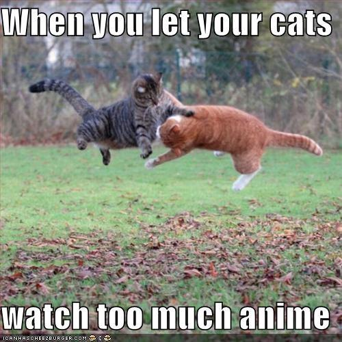 When You Let Your Cats Watch Too Much Anime