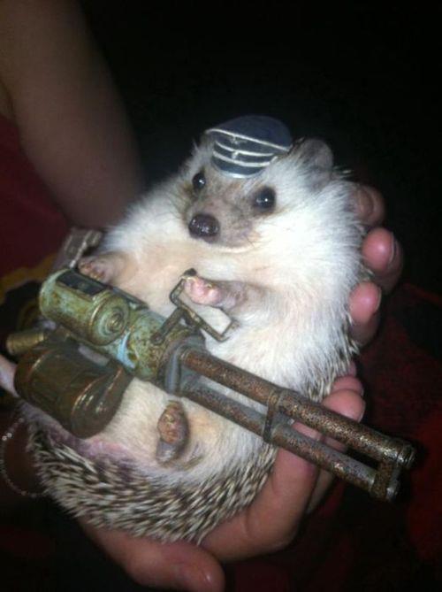 Dr. John Watson as British army hedgehog