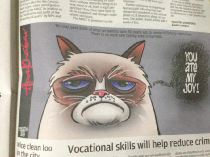 Malaysian comic artist drawing of grumpy cat