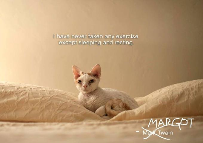 Wise Cat: Fitness