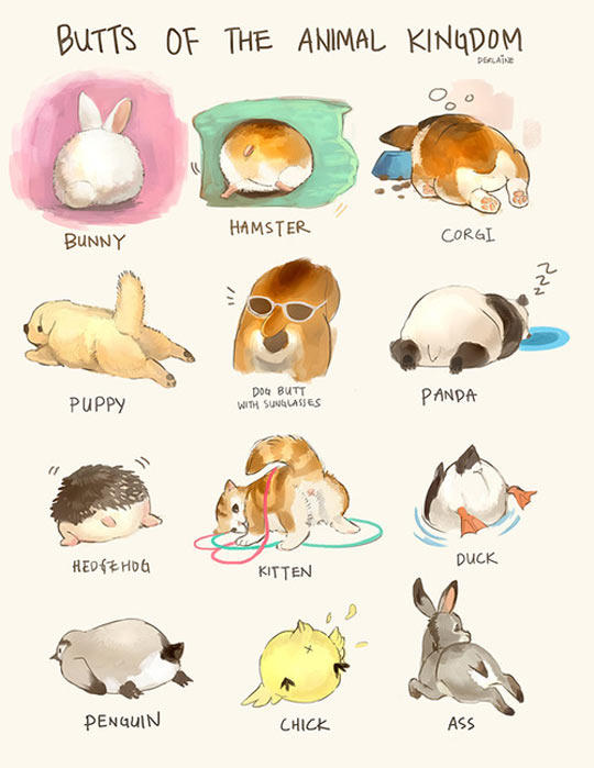 Butts of The Animal Kingdom