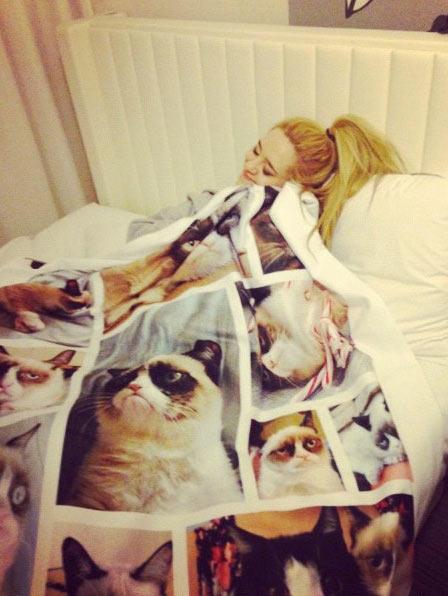 74a grumpy cat blanket grumpy cat know your meme,Cat Blanket Meme