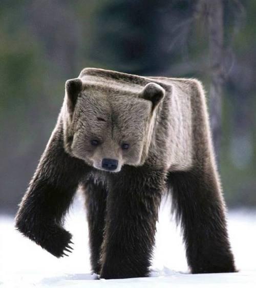 Minecraft bear??