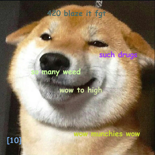 Stoned doge