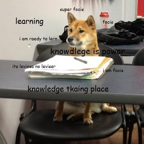 Doge in School